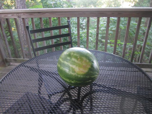 giftmelon.JPG