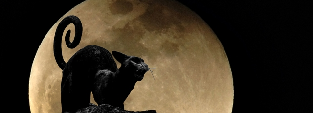 Cat-and-Full_Moon_2v2-header.jpg