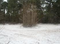 snow jan 16