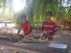 aligator14